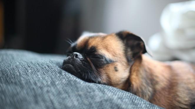 dog-takes-a-nap